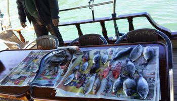 fethiye-balık-avı